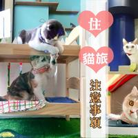 猫咪知识- 玮特台中猫咪旅馆ccp-d27-d27